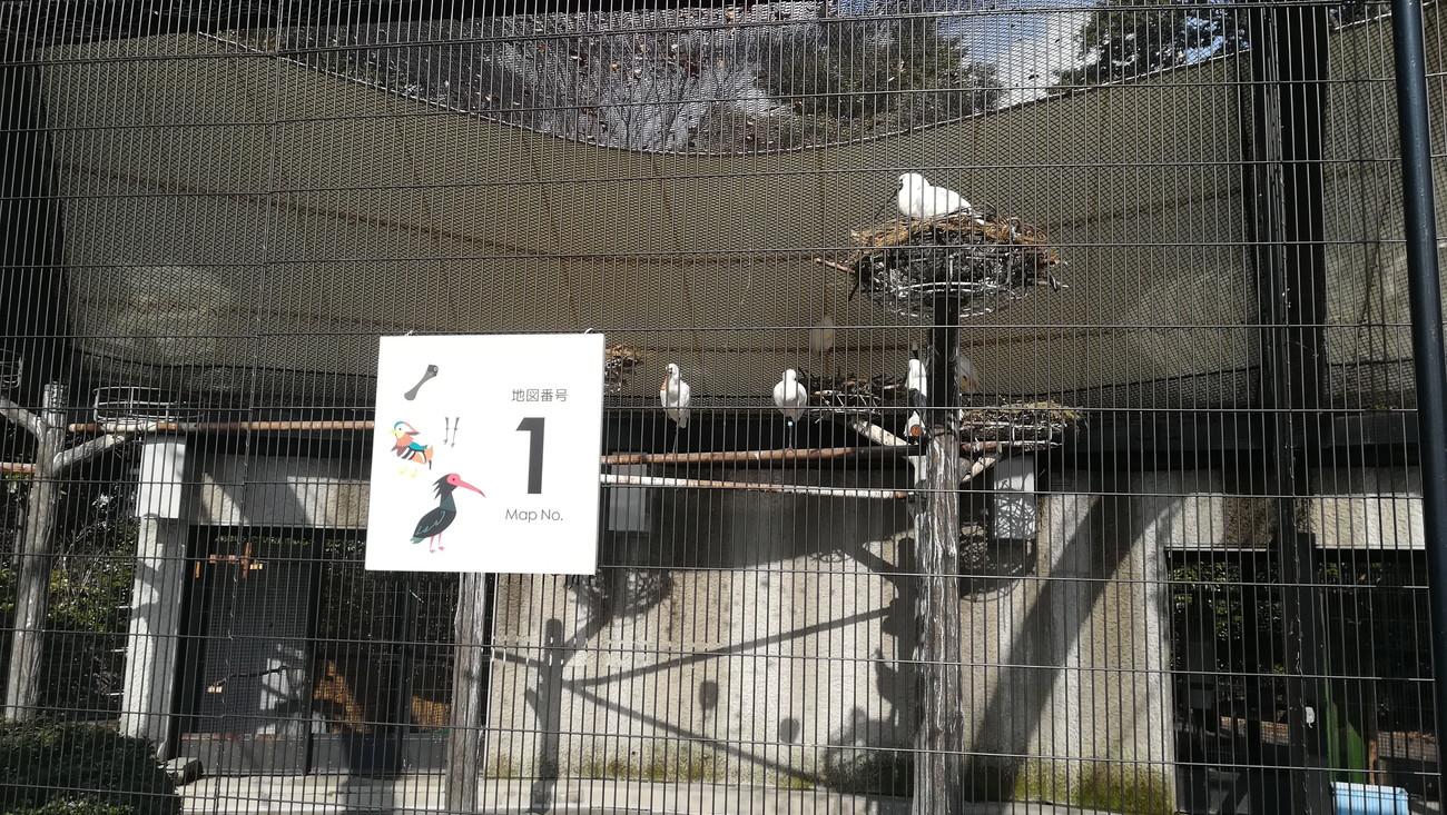 野毛山動物園 オシドリ・トキのなかま