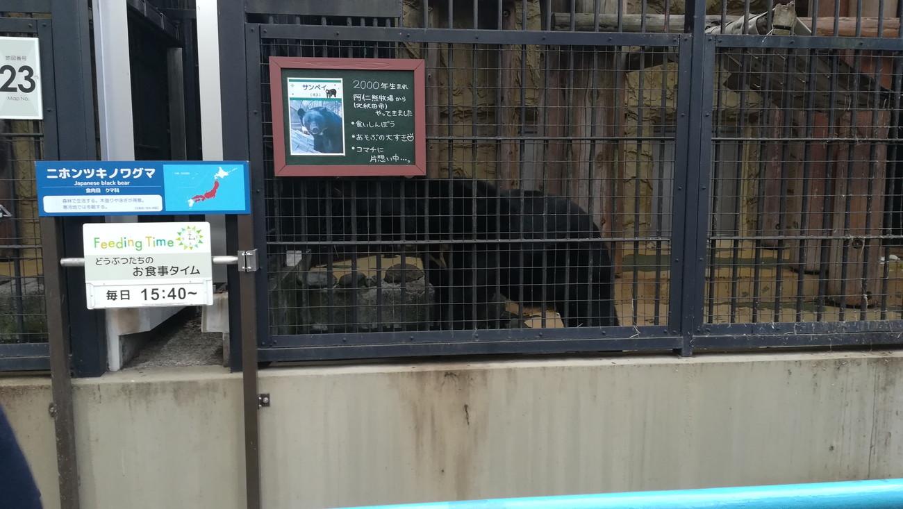 野毛山動物園ツキノワグマ