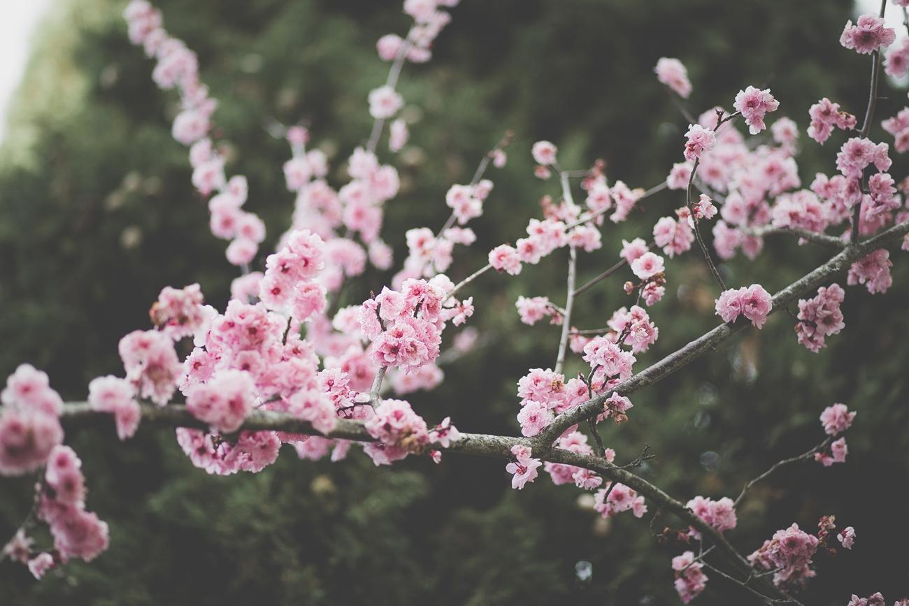 関東に住んで春と秋が好きになった4つの理由