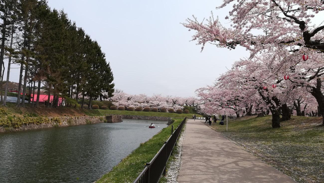 【函館】GWが行きどき!五稜郭公園で春の桜を満喫したよ。