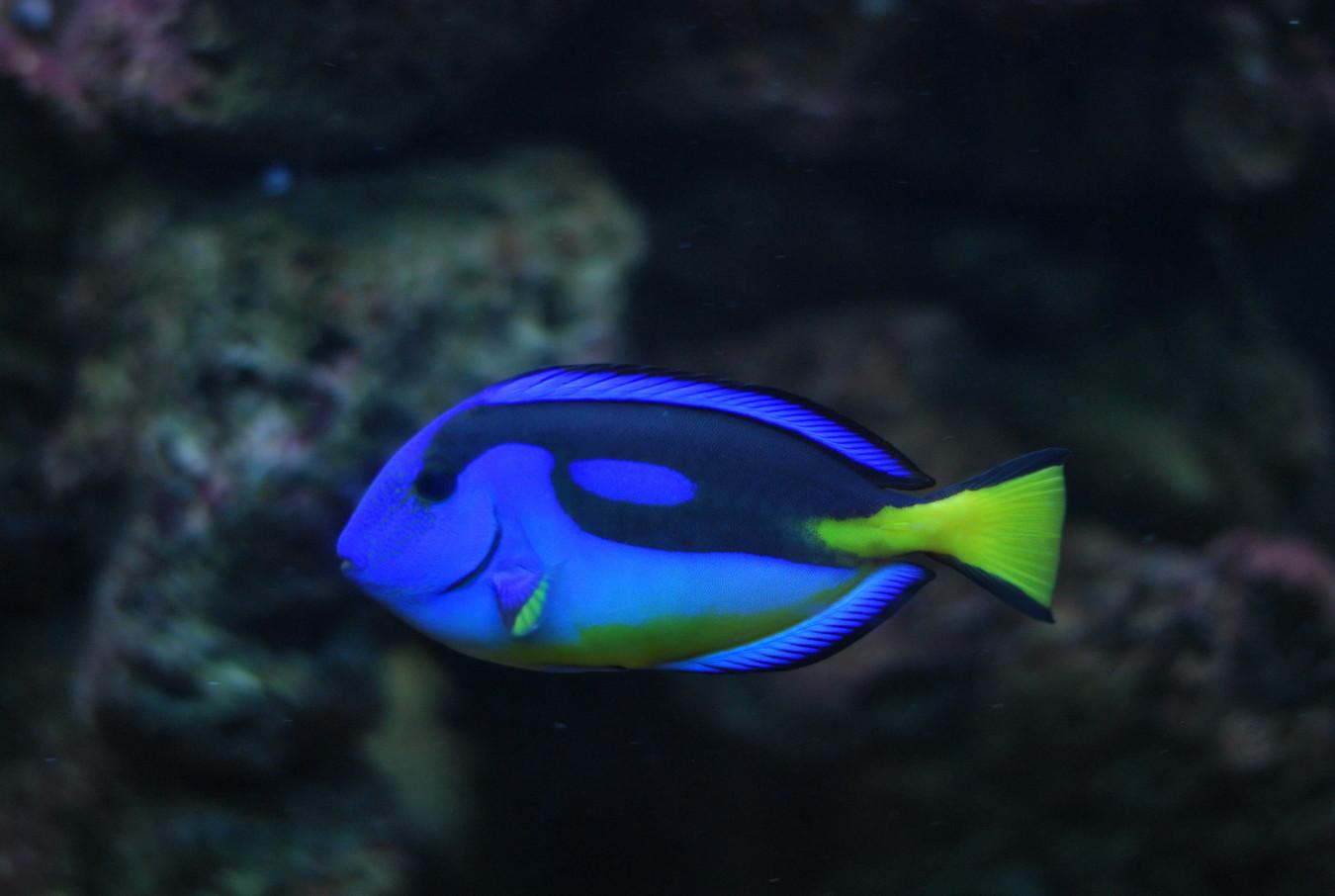 【読概】性転換する魚たち -サンゴ礁の海から-
